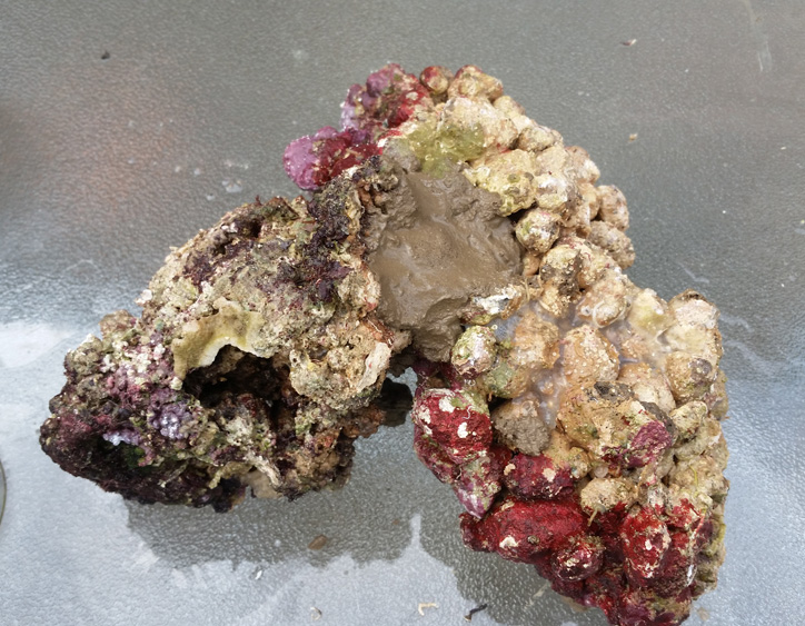 żywa skała