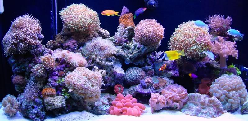 sól morska - Akwarium LPS