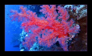 Obsada akwarium morskiego