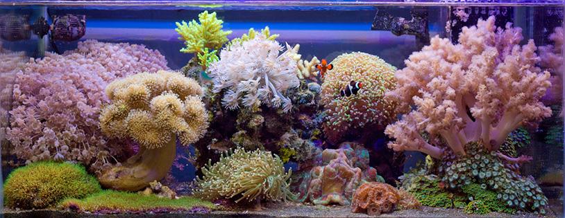 sól morska - akwarium z koralami miękkimi