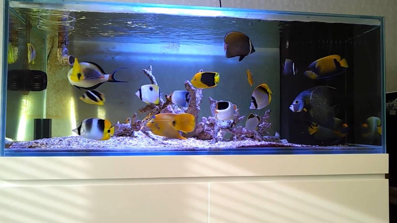 sól morska - akwarium typu Fish Only