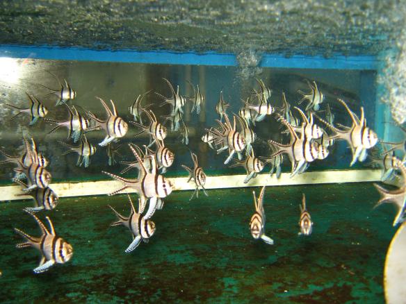 aklimatyzacja i transport ryb