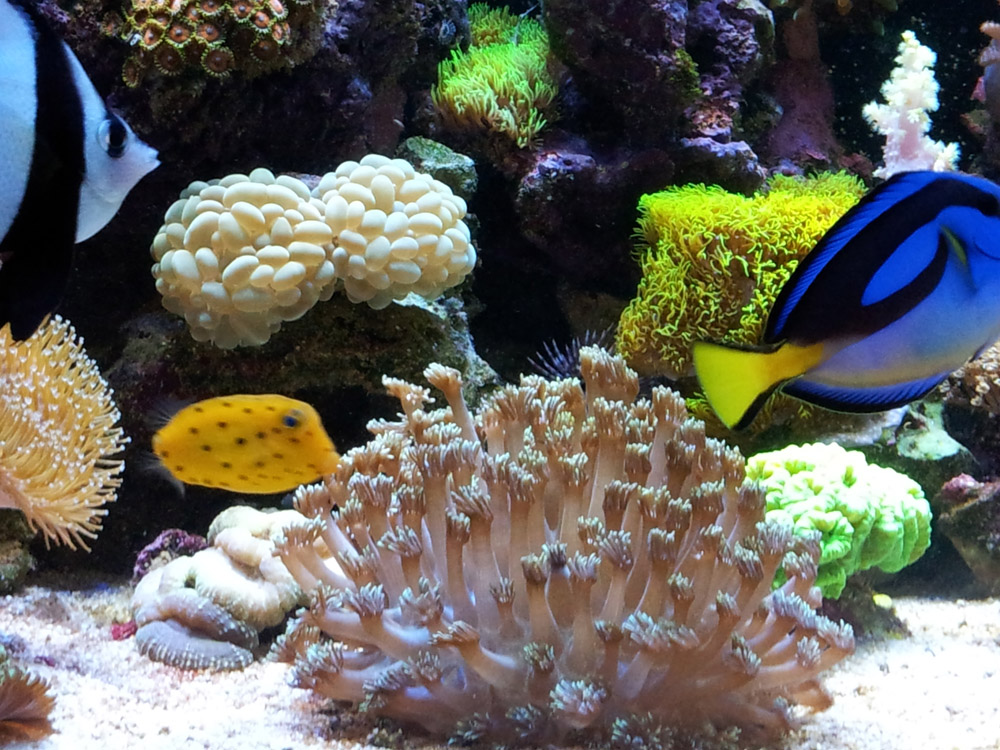 Adam Świątek - Akwarium morskie