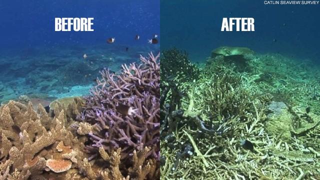 Bielenie korali na rafie