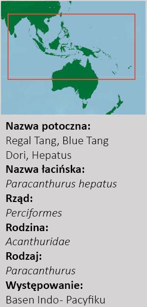 Paracanthurus hepatus - taksonomia