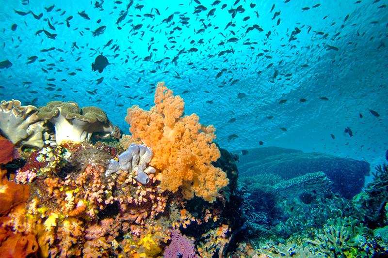 Prądy na rafie koralowej