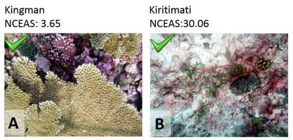 Czy mam ładne korale?
