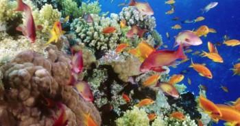 jakie ryby do akwarium?