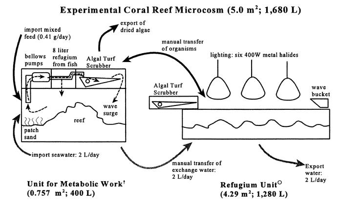 Eksperyment prowadzony 8 lat w akwarium z filtracją ATS algalturfscrubber.com/parameter.htm#null