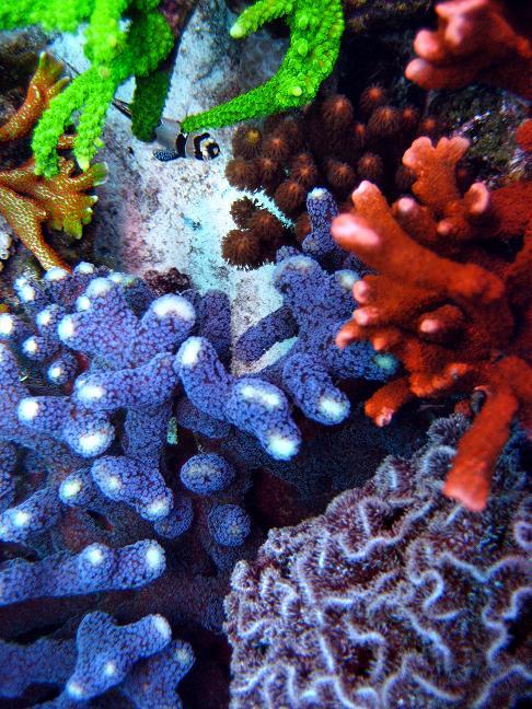 Totm nano-reef
