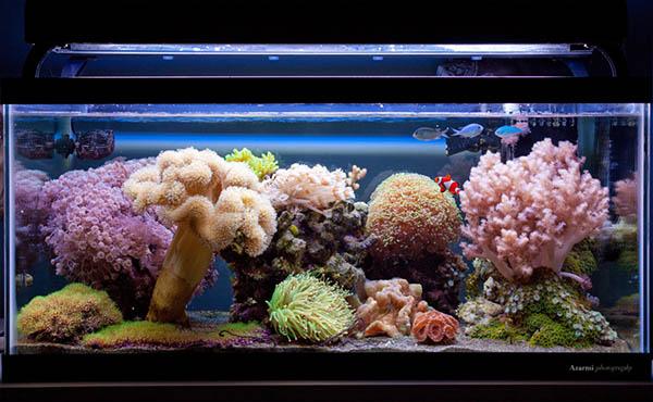 Piękny zbiornik z prostymi koralami miękkimi i LPS.