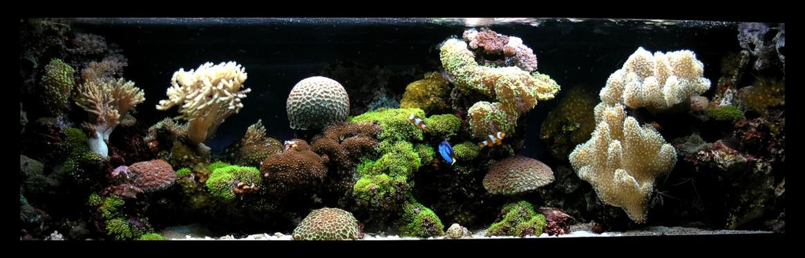kranówka w akwarium