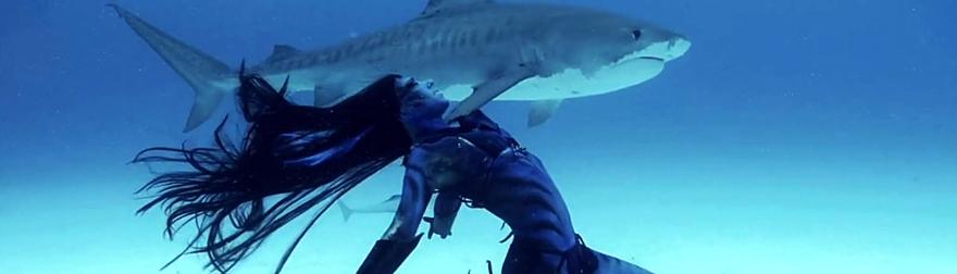 Tańcząca z rekinami