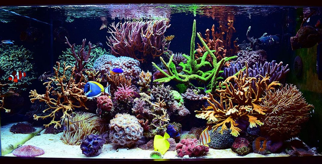 ToTM Reefhub