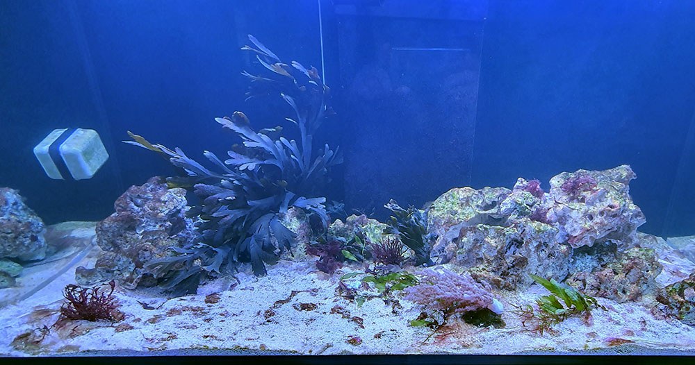 Akwarium po kuracji na cyjano